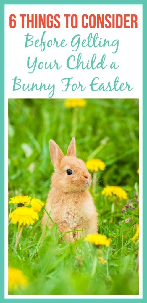 A lot of children ask for a bunny for Easter. Before running out to purchase a bunny for Easter for your child, consider these 6 things.